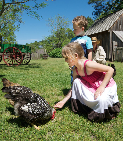 Children feeding the animals at Island Farm.