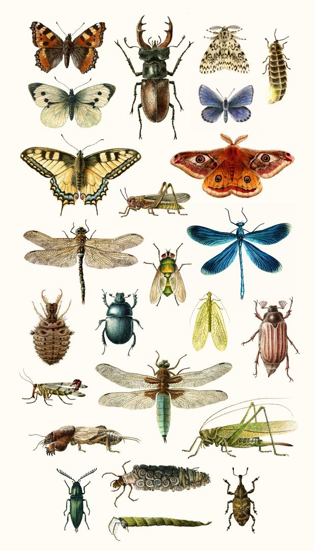 svenska insekter