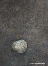 Fossiel,