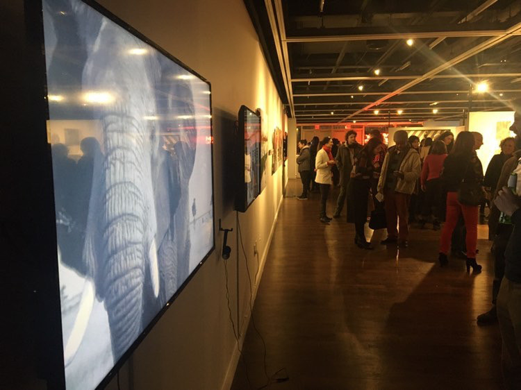 Intallation shot of 'An Apology to Elephants' at The Anya and Andrew Shiva Gallery at John Jay College of Criminal Justice