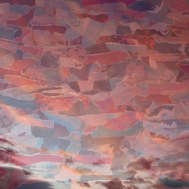 'Pink Rhapsody', 2016