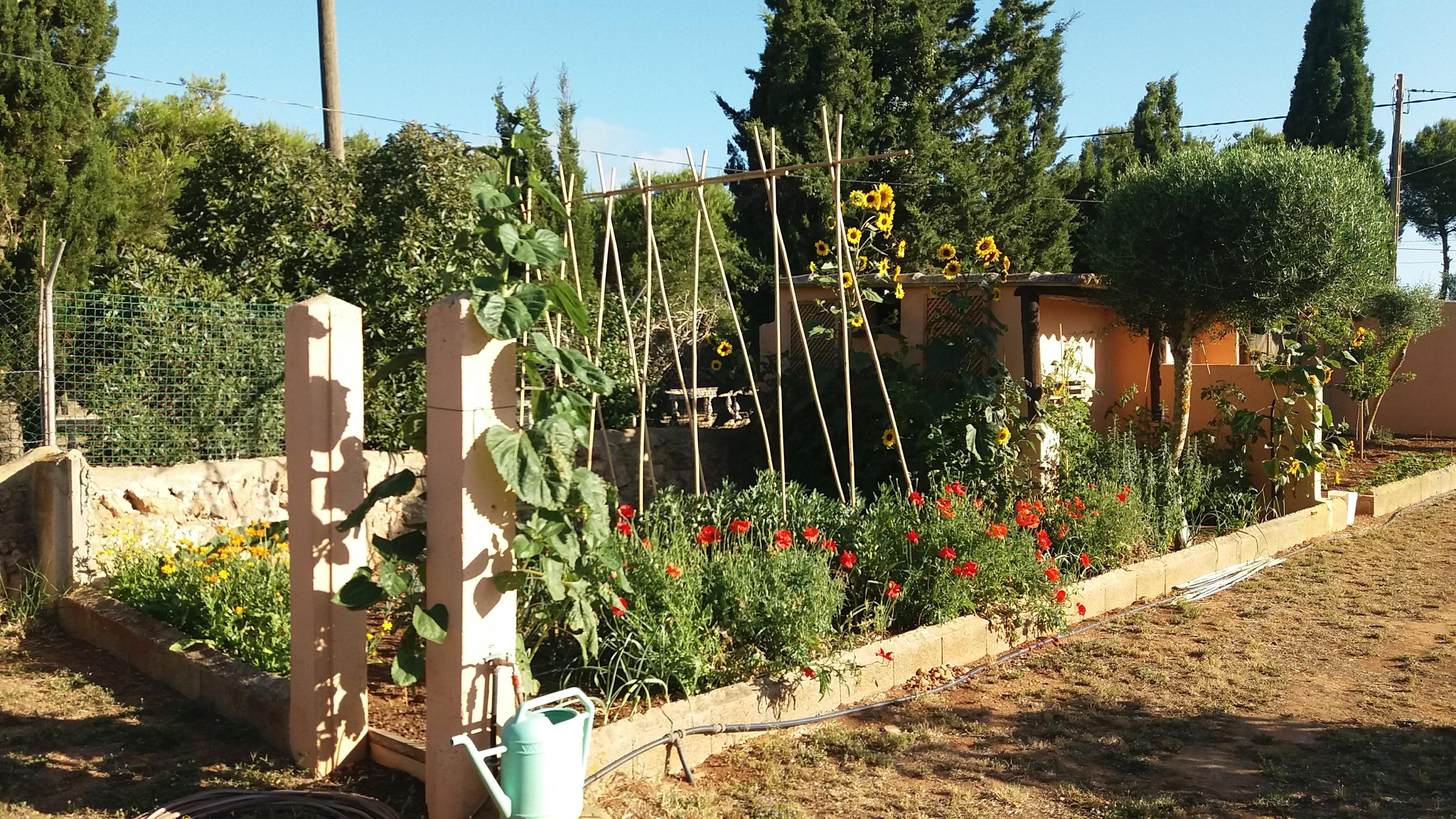 Gemüsegarten und Insektenvielfalt