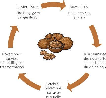 Le cycle des noix à la ferme Qu'es Aquὸ