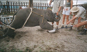 circus cruelty.jfif