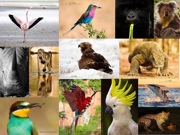 Dia-Mundial-del medio ambiente.jpg