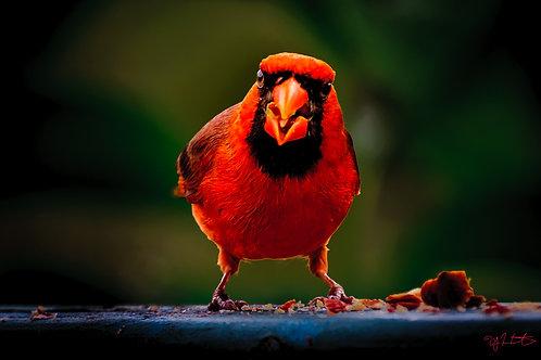 Cardinal #16