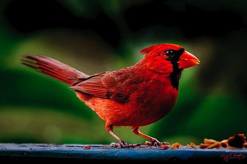Cardinal #4