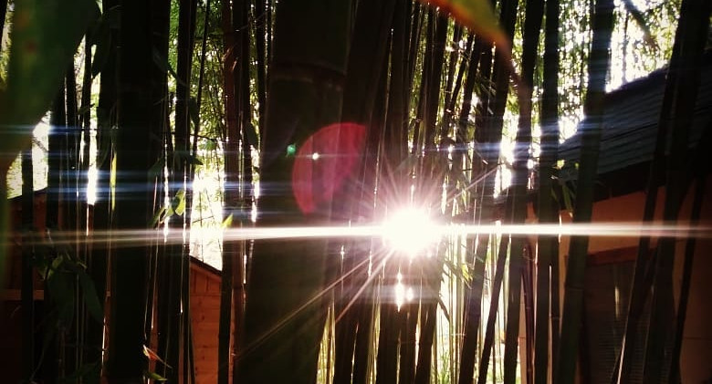 sun in the bamboo