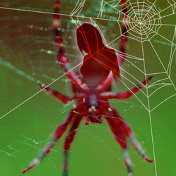 Der Kuss der Spinnenfrau – der Kultroman als Bühnenstück