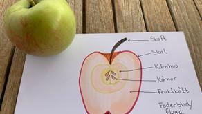 Äpple undervisning på hösten