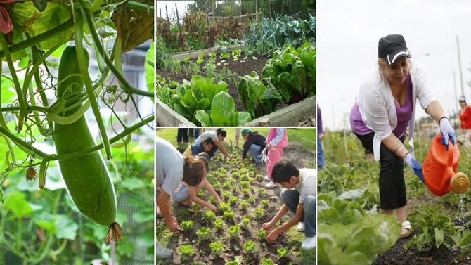 Community Garden in Grand Island