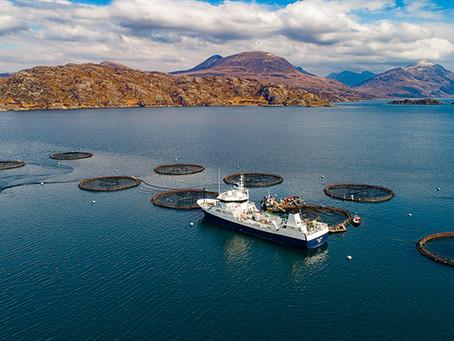 Aquaculture feeding Africa