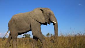 National Wildlife Parks in Zimbabwe