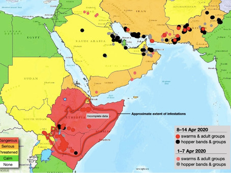 Fighting locust swarms and coronavirus in NE Africa