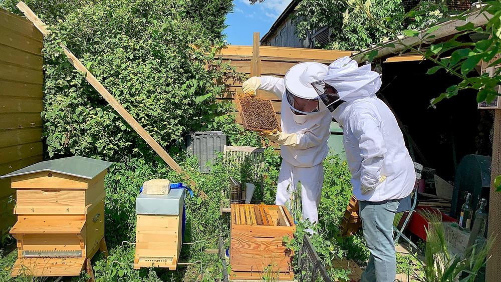Reproduire des alvéoles - habitat des abeilles