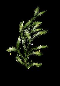 Branche printemps.PNG