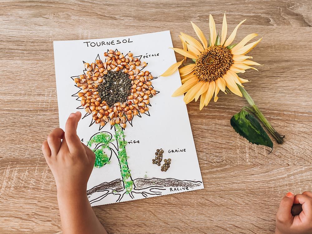 Un joli tournesol ! Botanique activité enfant