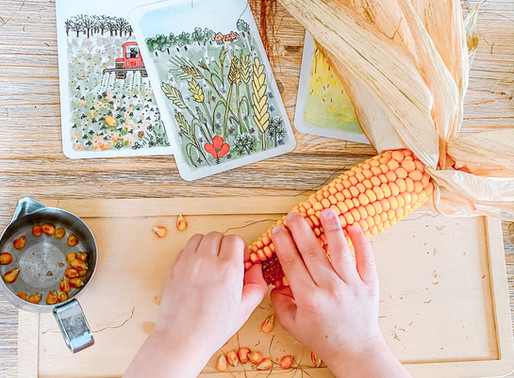 Epis de maïs et motricité fine