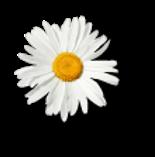 Flor Branca Menina Zen