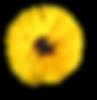 Flor amarela Menina