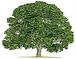 logotree.png