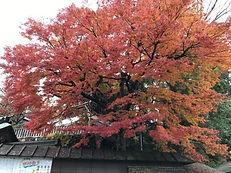2201911高尾山-.jpg
