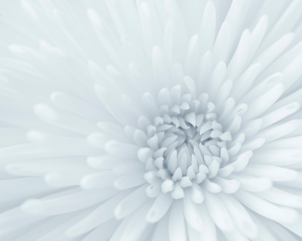 vecteezy_chrysanthemum-close-up_837628.j