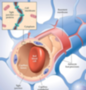 nanorobotic-agents-open-the-blood-brain-