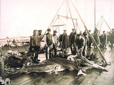 Гурьев 1894