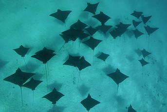 Diving cpr Moorea Fun Dive (1).jpg