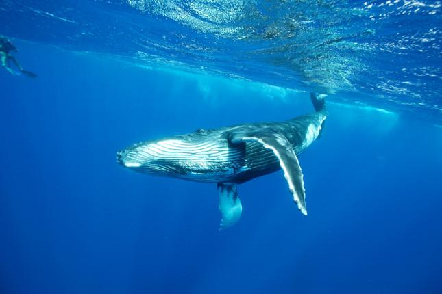 Tahiti-Whale Watching East Coast2.jpg