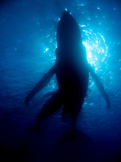 Diving cpr Hemisphere Sub (1)_edited.jpg