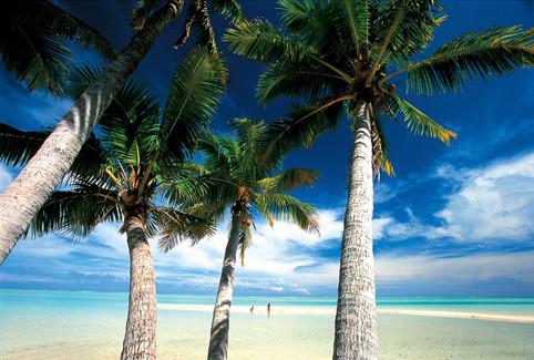 Rangiroa-coconut-trees.jpg