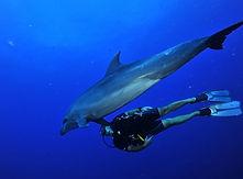 rangiroa-scuba-diving-dolphin.jpg