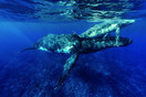 Rurutu - Whale Discovery.TheExplorerNetw