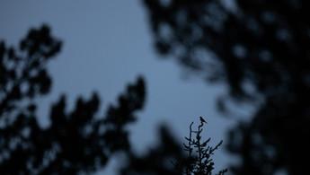 Récit - Deux jours, bercé par le chant des oiseaux