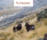 Puigmal 09-11-2014 (116).jpg