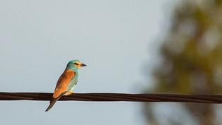 Récit - Les oiseaux colorés sont de retour
