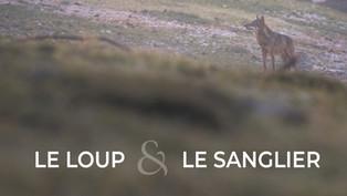 Le loup et le Sanglier