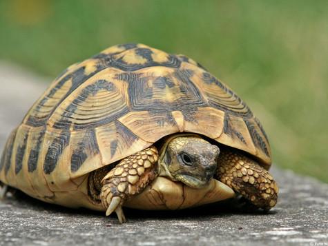 Chiusi come una tartaruga nel guscio