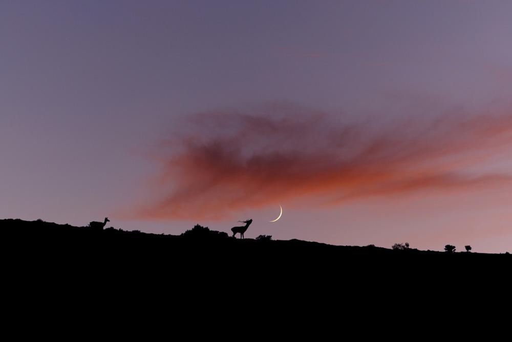 2 deer on a mt. ridge