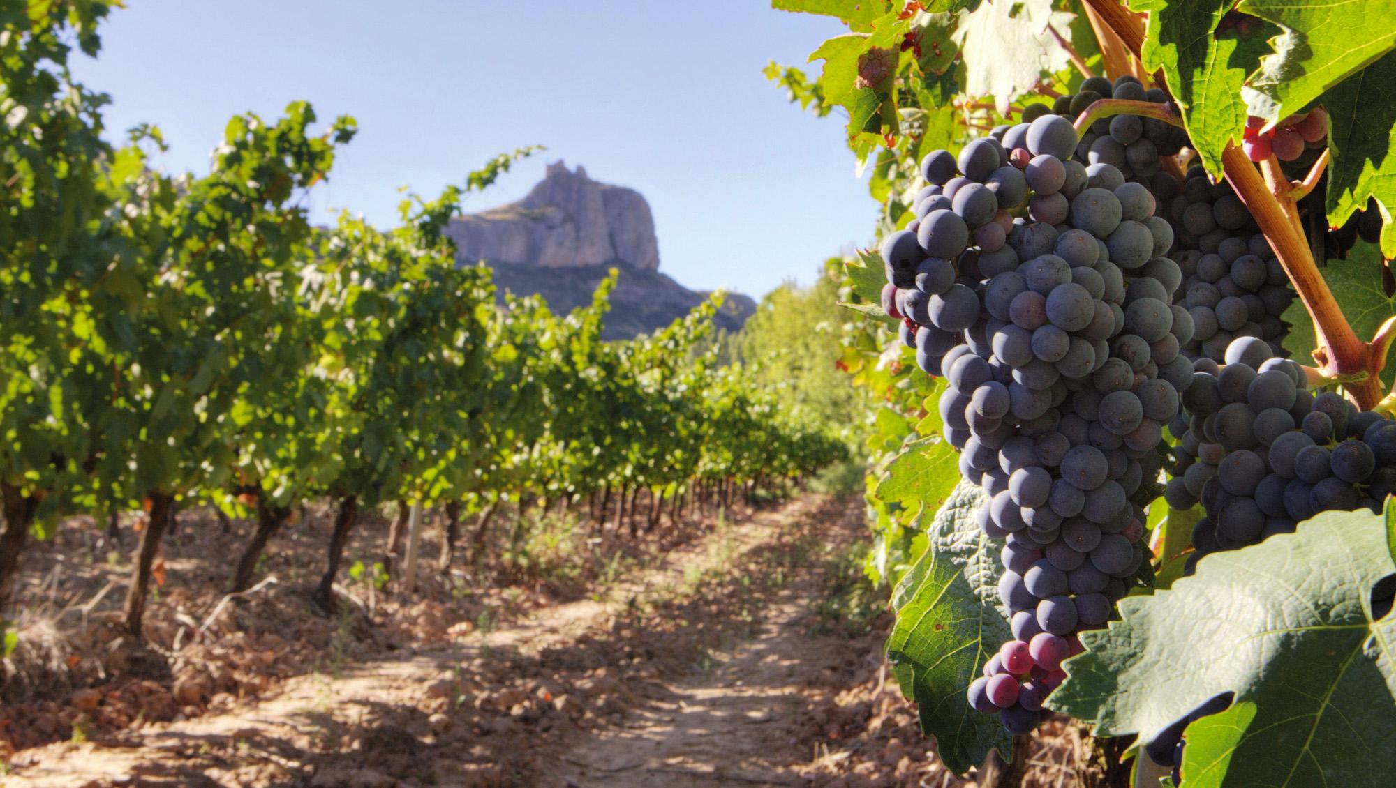 Vinedos-rioja-castillo-clavijo