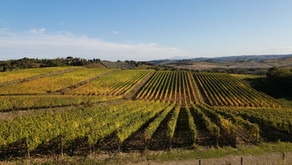 November in Tuscany: a month for Foodies