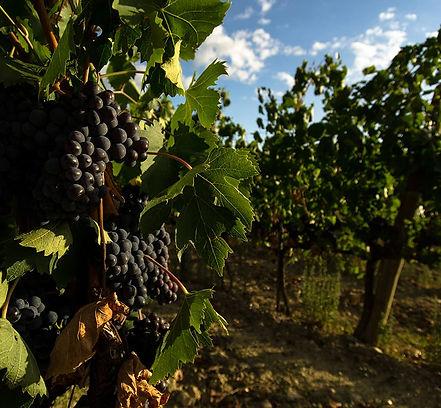 private-brunello-wine-tour.jpg