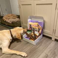 Treat Box for Dogs