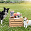 Thumbnail: Perfect Pet Treat Box for Dogs - Luxury with Tough Chew & Toy