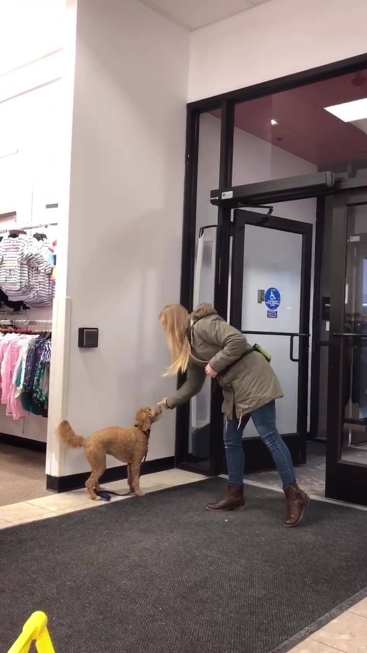 Great training session with Beyond the Dog today at Oak Park Mall. Here's a little video showing some of Moxie's progression of pushing the handicap button..ending with pushing it with a free leash. Thanks Stephanie! 😊❤️🐶🐾