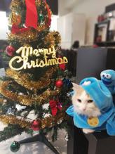 ☆メリークリスマス~~☆