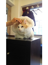 ☆猫と卓球☆