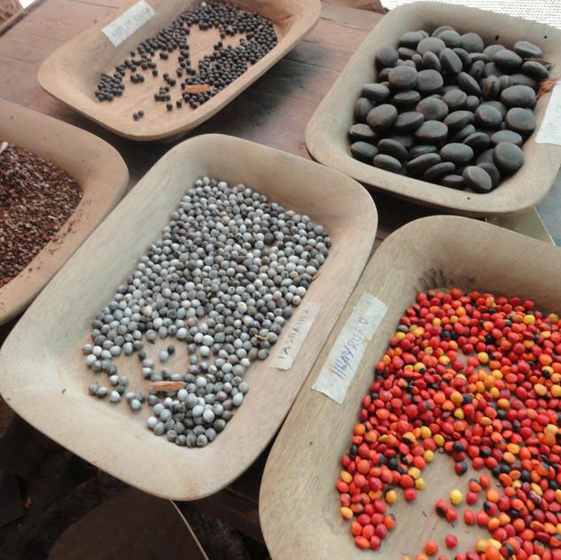 Rainforest Seeds